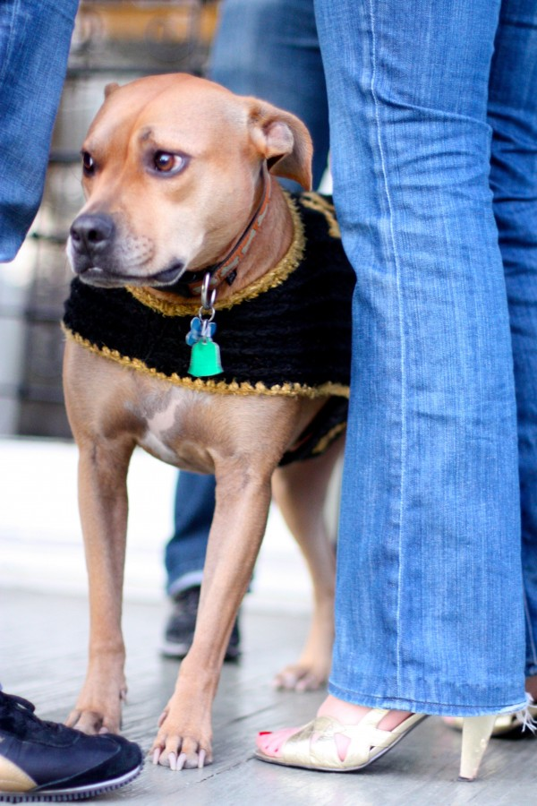 dog in saints cape
